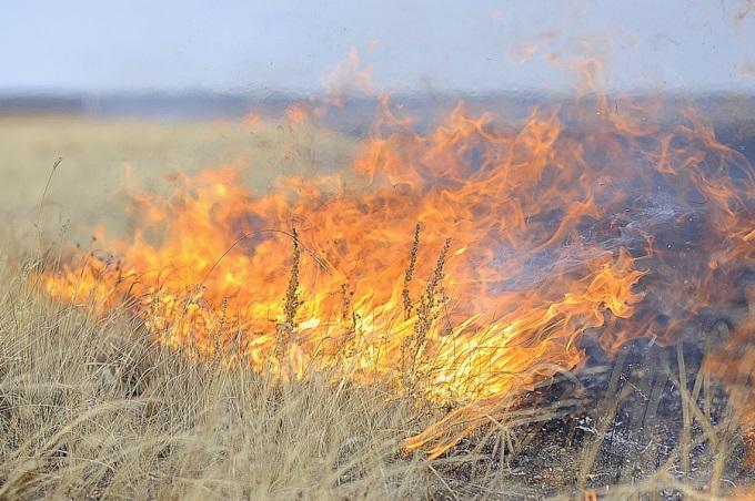 Пожары в Харьковской области уничтожили десятки гектаров пшеничных полей