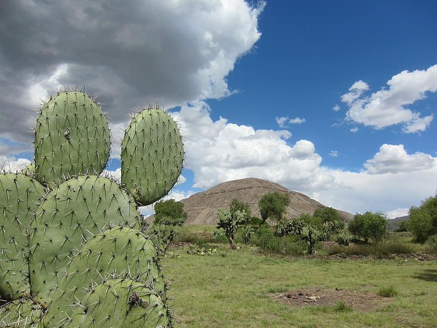«ХТЗ — родина кактусов»: в харьковском дворе расцвела мексиканская флора