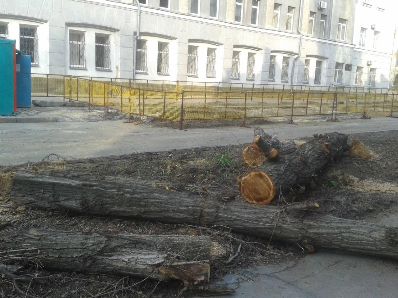 Харьковские власти выделяют миллионы на зеленые насаждения вместо уничтожаемых ими же